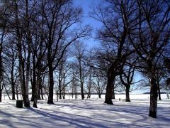 hiver-suede.jpg